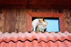 Gatti divertenti Fotografie Stock