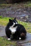 Gatti divertenti dopo la pioggia Nel giardino Fotografia Stock Libera da Diritti