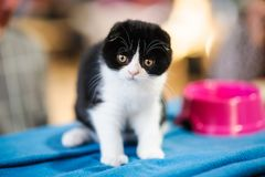 gatti divertenti nel canestro sul panno Fotografia Stock Libera da Diritti
