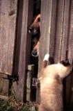 Gatti e cani Fotografie Stock Libere da Diritti