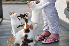Gatti e le gambe della donna Fotografia Stock