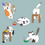 Gatti e raccolta dell'alimento Fotografia Stock