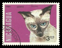 Gatti, gatto siamese Immagine Stock Libera da Diritti