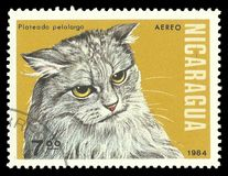 Gatti, Longhair argenteo Fotografie Stock