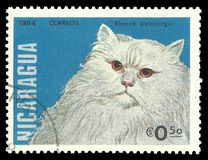 Gatti, Longhair bianco Fotografia Stock