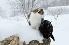 Gatti nella neve Fotografie Stock