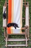 Gatti neri Fotografie Stock