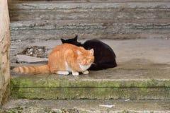 Gatti neri e rossi della via sulla pietra Fotografie Stock Libere da Diritti