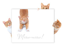 Gatti rossi Fotografia Stock Libera da Diritti