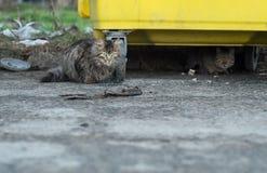 Gatti selvaggi Fotografia Stock Libera da Diritti