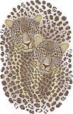 Gatti selvaggi Portait delle coppie del leopardo Immagini Stock Libere da Diritti