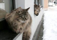 Gatti senza casa Fotografia Stock