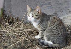 Gatti senza casa immagini stock libere da diritti