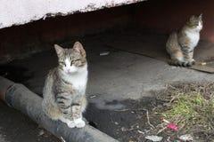 Gatti senza casa Fotografie Stock