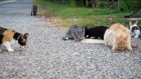 Gatti senza tetto che mangiano l'alimento dell'alimentazione sulla via video d archivio