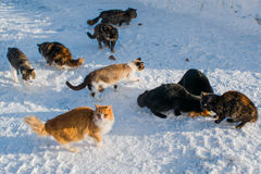 Gatti senza tetto della via nella neve Fotografie Stock Libere da Diritti