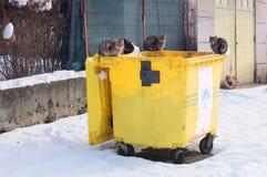 Gatti smarriti sul contenitore dell'immondizia nell'inverno Immagini Stock