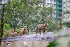 Gatti smarriti sul tetto fotografia stock libera da diritti