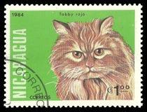 Gatti, soriano rosso Fotografie Stock
