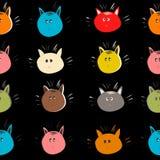 Gatti su fondo nero Immagine Stock