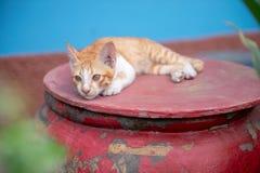 gatti sul barattolo immagine stock