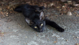 Gatti sul pavimento Fotografia Stock Libera da Diritti