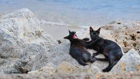 Gatti sulla spiaggia Immagini Stock Libere da Diritti