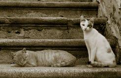 Gatti sulle scale Fotografia Stock