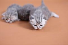 Gatti svegli del bambino Fotografie Stock