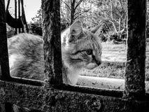 Gatti svegli della via sul recinto Fotografie Stock
