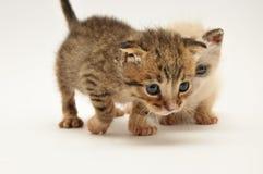 Gattini Immagini Stock