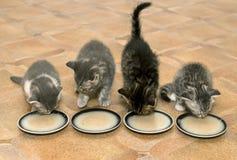 Gattini Fotografia Stock Libera da Diritti