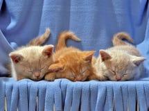 Gattini Fotografie Stock Libere da Diritti