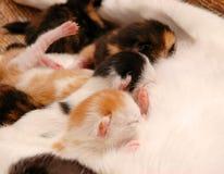 Gattini fotografie stock