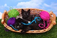 Gattini allegri amorosi in un canestro di filato Immagine Stock Libera da Diritti