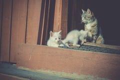Gattini bianchi e madre retro Immagini Stock Libere da Diritti