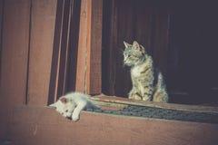 Gattini bianchi e madre retro Fotografia Stock Libera da Diritti