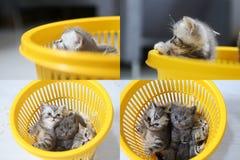 Gattini in canestro giallo, multicam, schermo di griglia 2x2 Fotografia Stock