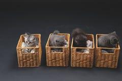 Gattini in casse di legno Fotografie Stock