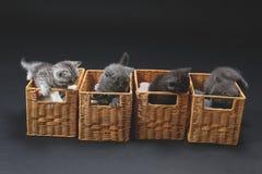 Gattini in casse di legno Immagini Stock