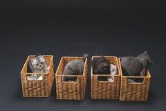Gattini in casse di legno Immagine Stock Libera da Diritti