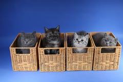 Gattini in casse di legno Fotografie Stock Libere da Diritti