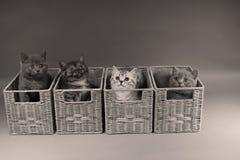 Gattini in casse di legno Immagini Stock Libere da Diritti