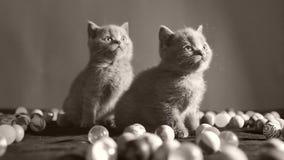 Gattini che giocano le palle stock footage