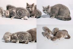 Gattini che mangiano alimento per animali domestici dal pavimento, multicam, schermo di griglia 2x2 Fotografia Stock