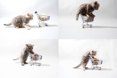 Gattini che mangiano da un carrello, schermo di griglia 2x2 Immagine Stock Libera da Diritti