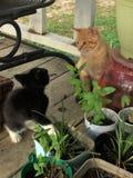 Gattini che si familiarizzano con fotografia stock libera da diritti