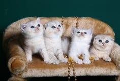 Gattini che si siedono su una priorità bassa verde. Immagini Stock