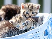 Gattini che si trovano in un canestro all'aperto Immagine Stock