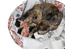 Gattini che sono sopportati Immagine Stock